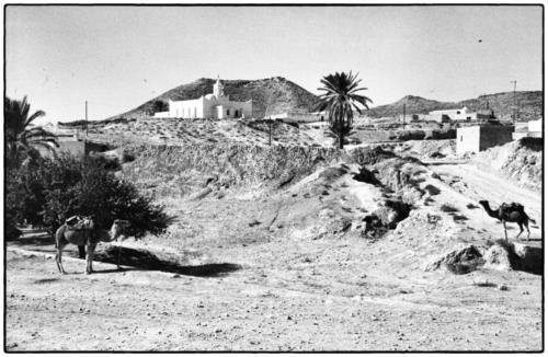 Camels Tunisia 1982