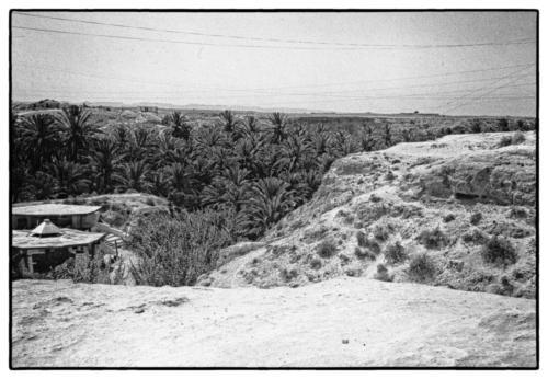 Oasis Tunisia 1982